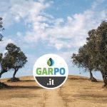 Concimare gli ulivi - Garpo