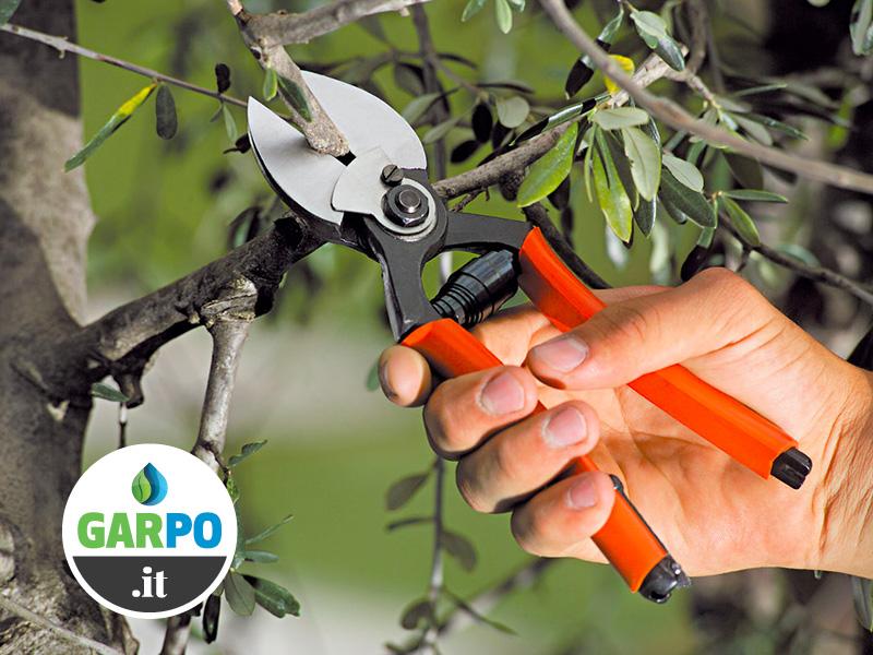 Corso online Potatura olivo e alberi da frutto: Garpo & Stocker